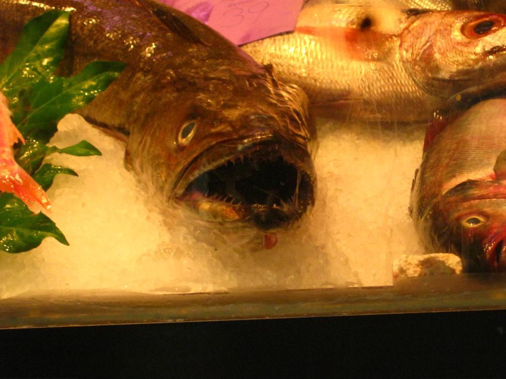 Der Fisch stinkt vom Kopf her